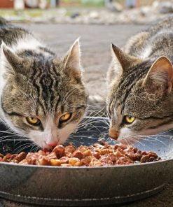Nat voer kat